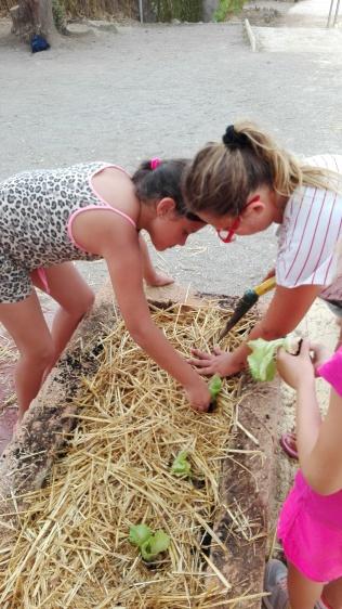 Fem els forats per plantar