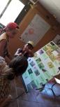 aprenentdels insectes