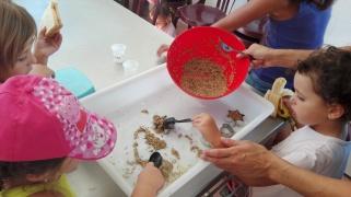 menjar per ocellets