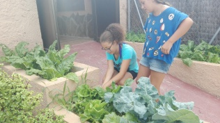 Plantant enciams